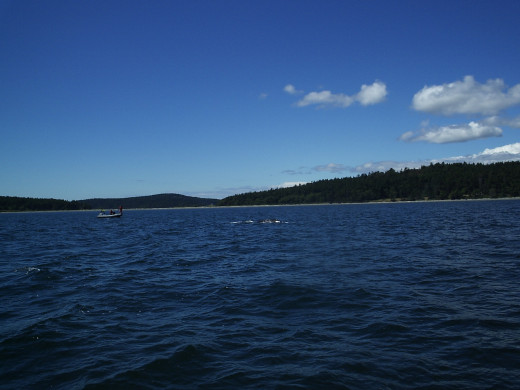 Whale watching is a popular activity in the San Juan Islands, and it's a great way to enjoy the natural beauty of the islands.