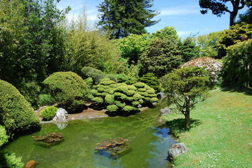 Take your date for a stroll through the San Francisco Botanical Garden.