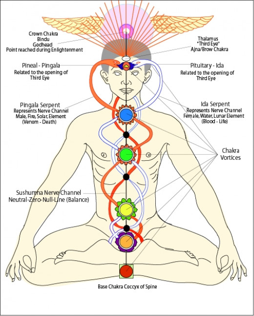 There is widespread belief that the body has several energy centers referred to as chackras that are linked to major glands in the body. By mastering each one in turn, one can become a practiced yogi.