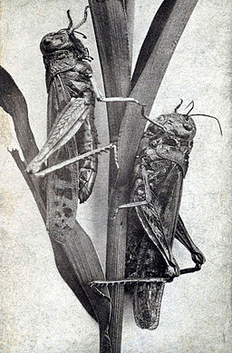 Locusts, grubs and flies were amongst the insects put on trial