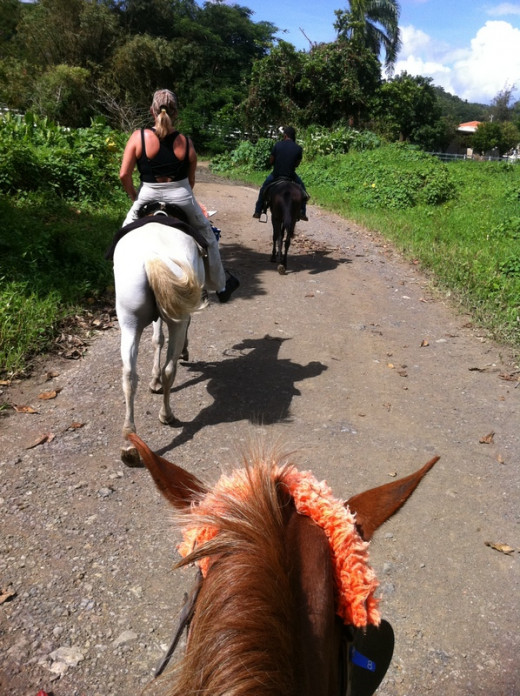 If you want to see the beautiful El Yunque National Park, I would recommend you take a horseback ride.