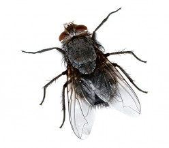 How to keep flies away from your dustbin and out of your kitchen