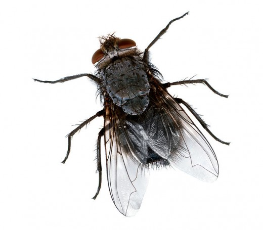 How to keep flies from entering your home?