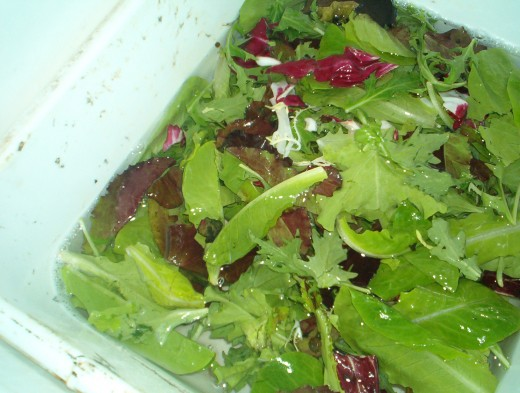 Soak greens in cold water.