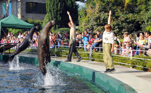 Seal-show in the zoo