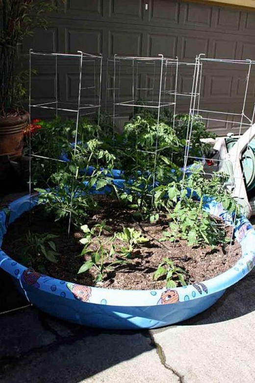 Building your own small garden using a kiddie swimming pool