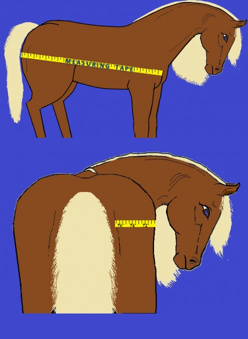Measuring for a Horse Blanket
