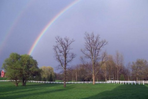 Afternoon spring shower, it had poured,then brought the most beautiful double rainbow I have ever seen.  My Illness slowed me down  and while I was recuperating and after learning how to walk again, I noticed things I never would have previously.