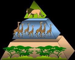 jungle life-system