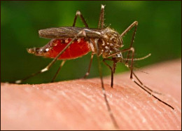 Although humans spread diseases just as easily mosquitoes usually get the blame.