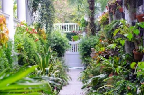 A Carolina garden.