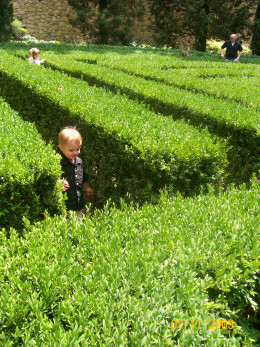 My little guy trying to find his way through the maze