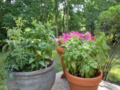 How do you make your own organic pesticide?