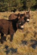 Our donkeys when they were babies