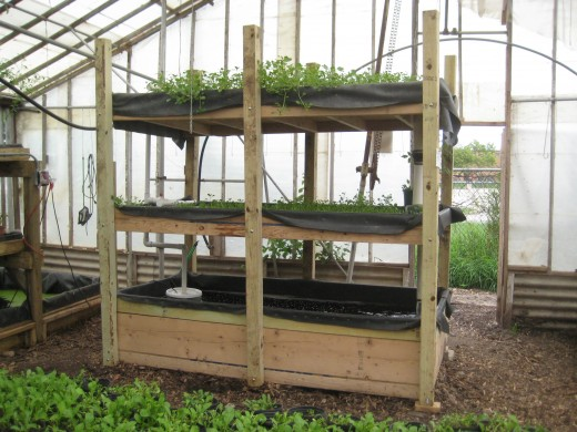 cc-by-2.0 Description A portable aquaponics system with watercress  Author: Charlie Vinz from Chicago  Date 28 August 2009(2009-08-28), 23:58