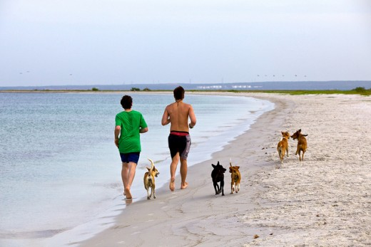 Dogs off leash loose even more weight.
