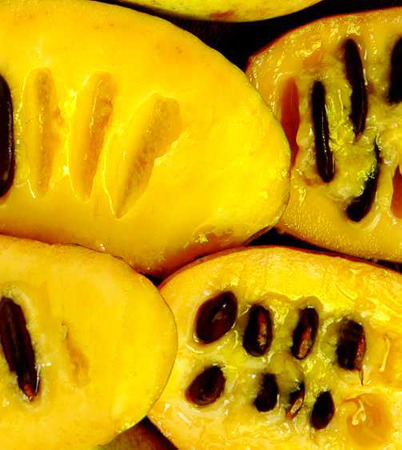 The golden interior of a paw paw fruit.