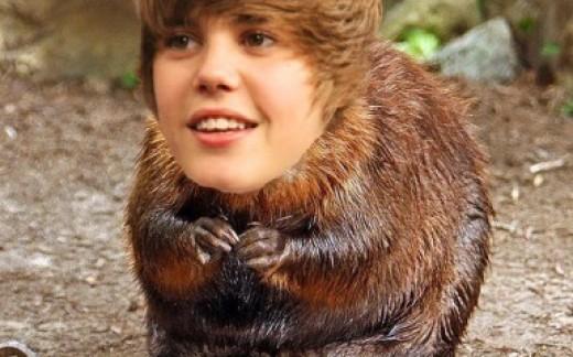 Justin Beaver - Pisces