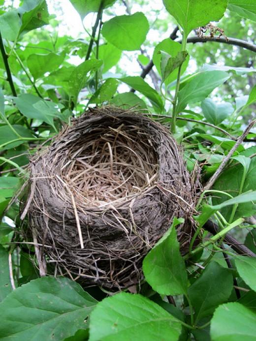 birdsnest singles & personals Birdsnest mona jones  this may contain online profiles, dating websites, forgotten social media accounts, and other potentially embarrassing profiles.