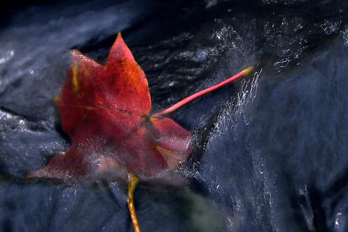 leaf from diggleburns Source: flickr.com