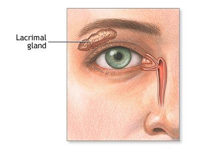 Lasers cut through nerves carrying tears from the lacrimal glands to the cornea.