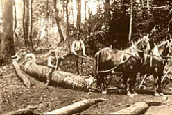 Paul Bunyan Boys of the Blue Ridge Mountains