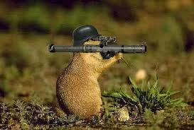 Woodchucks can be dangerous!