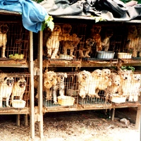 Puppy Mills - the scourge of the earth - perpetuating pain and suffering.