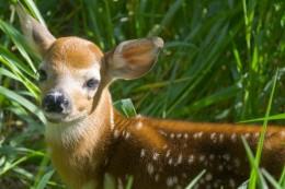 Run like a deer from the hunter