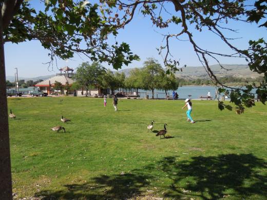 Lake Cunningham Park