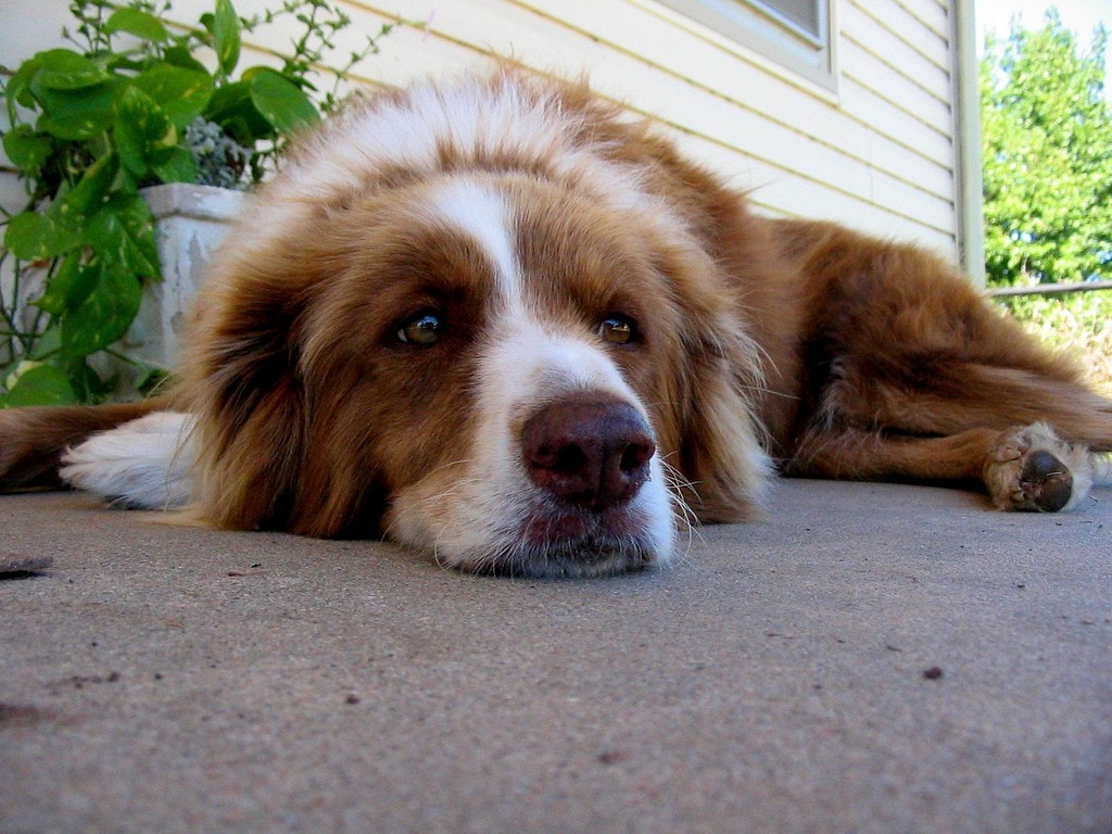Home Remedies For My Dogs Diarrhea