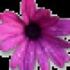 anya love profile image