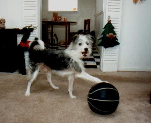 Razz playing with his favorite toy, a basketball. He continued to play with the toy even as he got older.