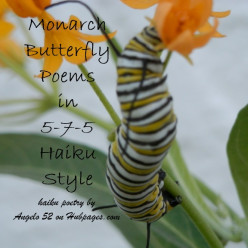 5 Monarch Caterpillar Poems in Haiku 5-7-5 Style