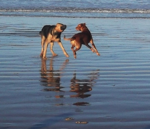 Garlic hounds at the beach.