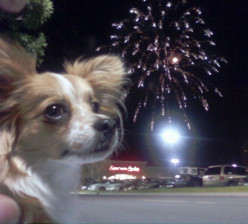 How to Train a Dog to Have No Fear of Fireworks By Using Conditioning