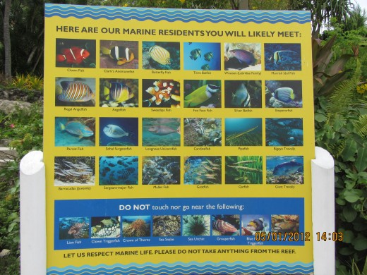 Poster of the different sea creatures one can see at the marine sanctuary. Trip Tip: Snorkel Gear rent is 300P, includes fins, mask and snorkel, and life vest
