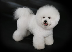 """What is a """"puppy cut""""?"""