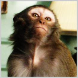 Solomon, Eileen Atkin's Monkey from Upstairs Downstairs