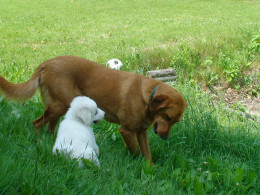 Rosco and Tuck.