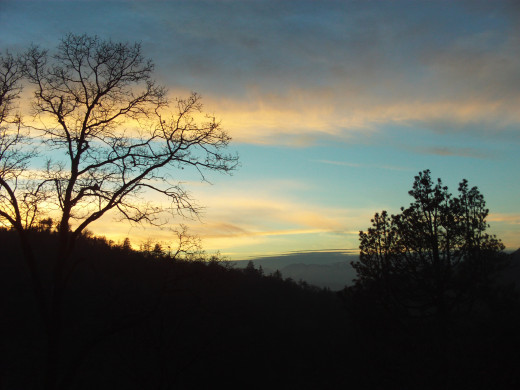 The outline of a beautiful tree at sunset up in the San Bernardino Mountains.