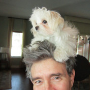 Harvey Stelman profile image