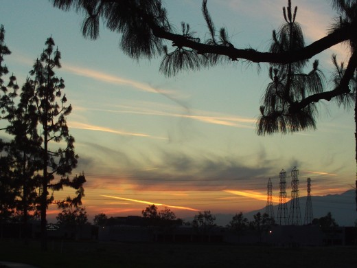 The silhouette of pine needles and a fiery colored sunset in Southern California.
