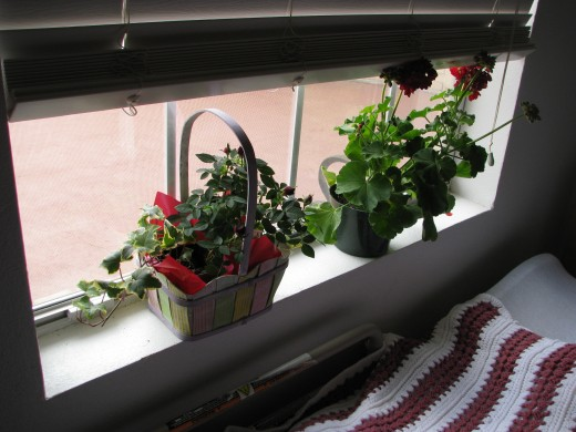 Plants by Window. If the Alzheimer's patient is bed bound, make that place pleasant with flowers, music, pictures and sunlight.