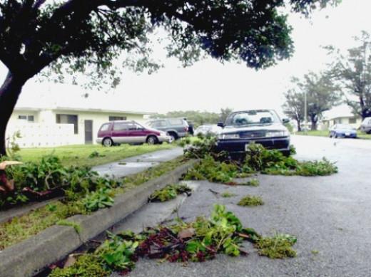 Typhoon Debris and Trees