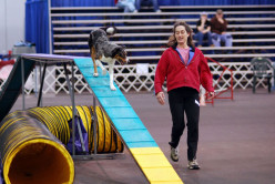 What's the difference between Rally, Agility and Obedience dog competitions?