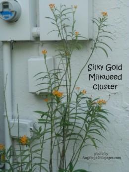 Original Clump of Flowers