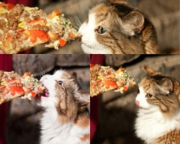 Your kitty will have to say goodbye to frozen pizza.