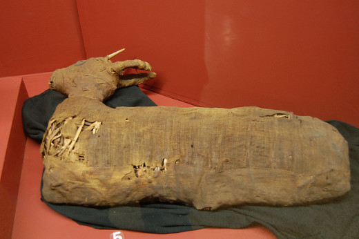 Mummified Gazelle