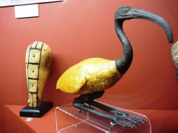 Mummified Ibis